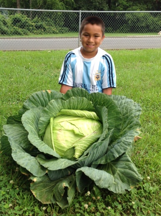 Daniel Quintero shows off his winning 39-pound cabbage at Brookwood Elementary School.